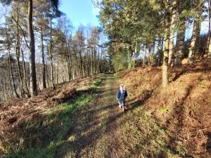 Shaun Glow Trail at Dalby Forest