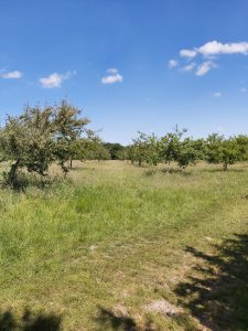 Lotherton-Walk-orchard