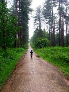 Sherwood-pines