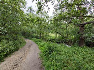 Meanwood-grove-walk