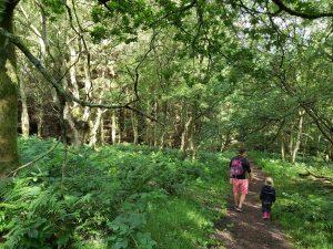 Woodland-may-beck