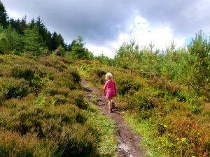Woodcock Way Trail, A Dalby Forest Walk