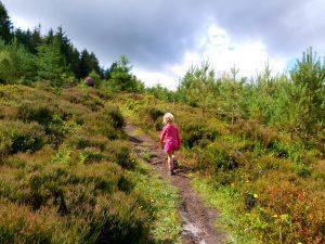 Woodcock Way Trail, A Dalby Forest Walk