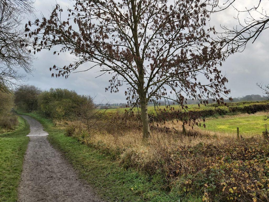 harland-way-spofforth